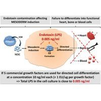 AMSbio - Animal Free  growth factors and cytokines
