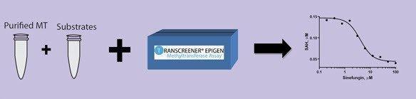 BellBrook Labs - TRANSZYME Methyltransferase Assay Kits