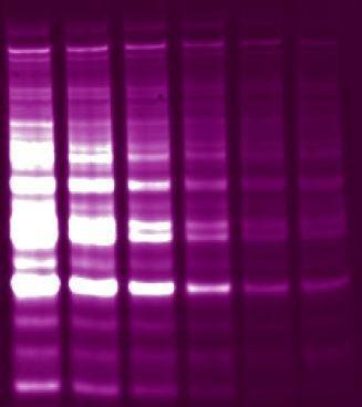 Biotium - Mix-n-Stain™