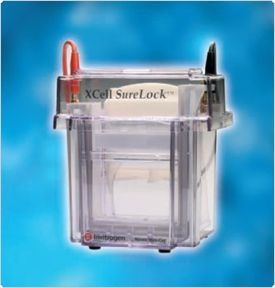 Thermo Scientific - Novex XCell SureLock™ Mini-Cell